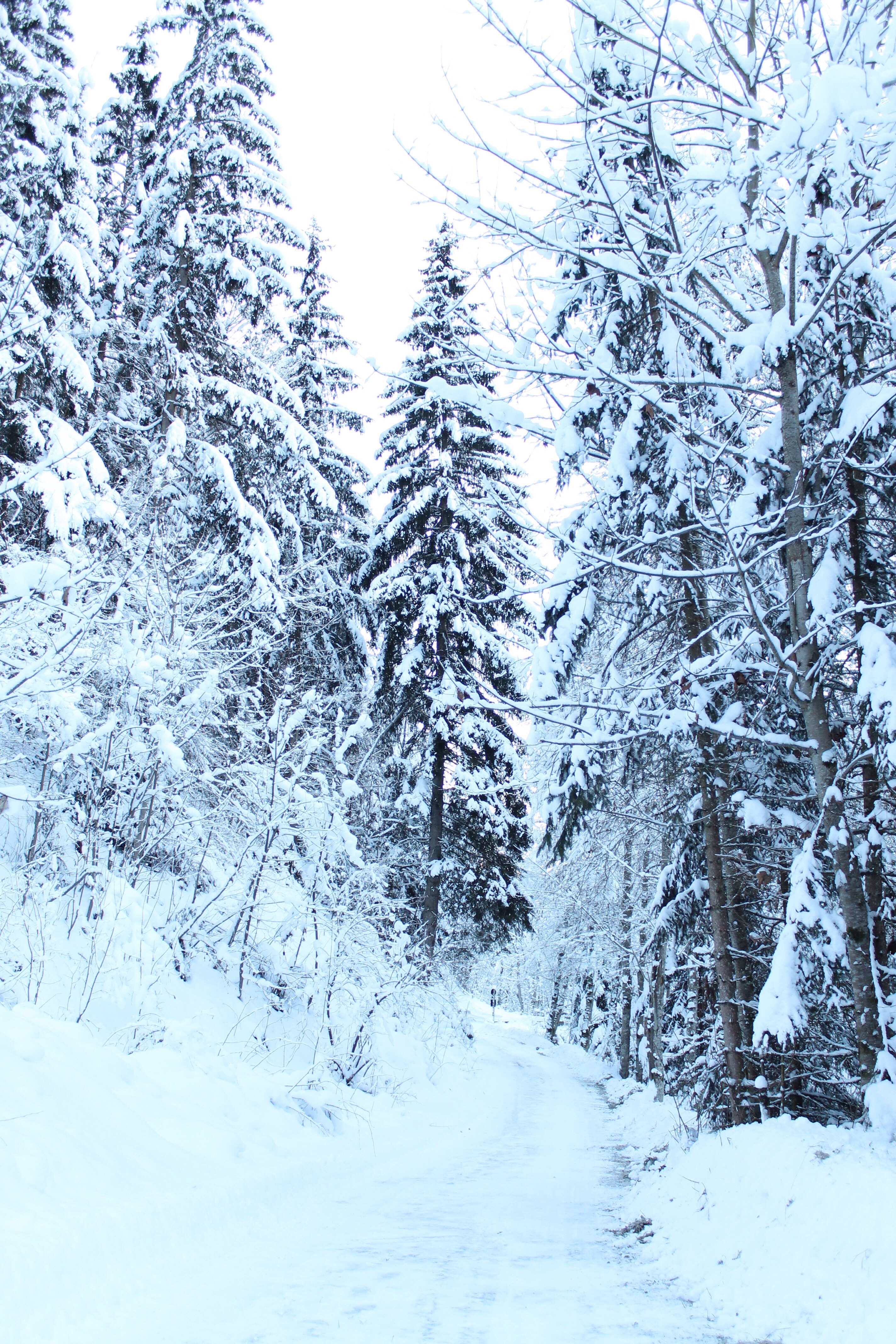 Alpbach forest by missneriss