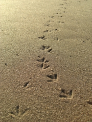 Footprints in the Sand, image by Katharina Schuetz sourced from http://www.dreamstime.com/